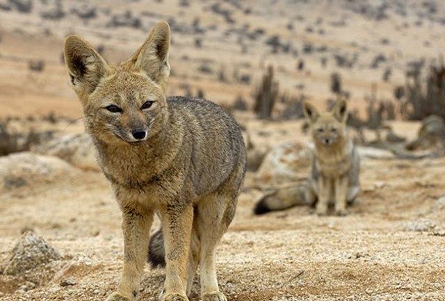 Desert National Park 1
